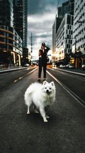 عکس-پس-زمینه-سگ (39)