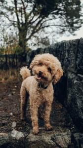 عکس-پس-زمینه-سگ (42)