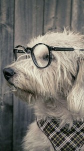 عکس-پس-زمینه-سگ (43)